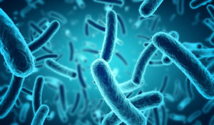 Beneficial bacteria produce the right type of enzymes